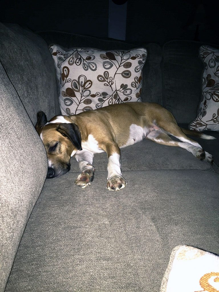 young puppy passed out on couch