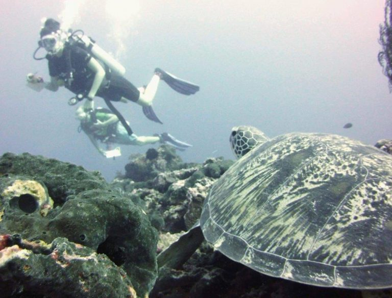 Research Dive showing Indonesia Turtle