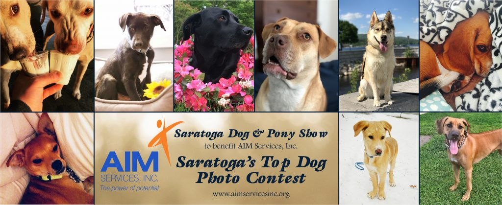 Pictures of dogs in a grid with text Saratoga's Top Dog Photo Contest