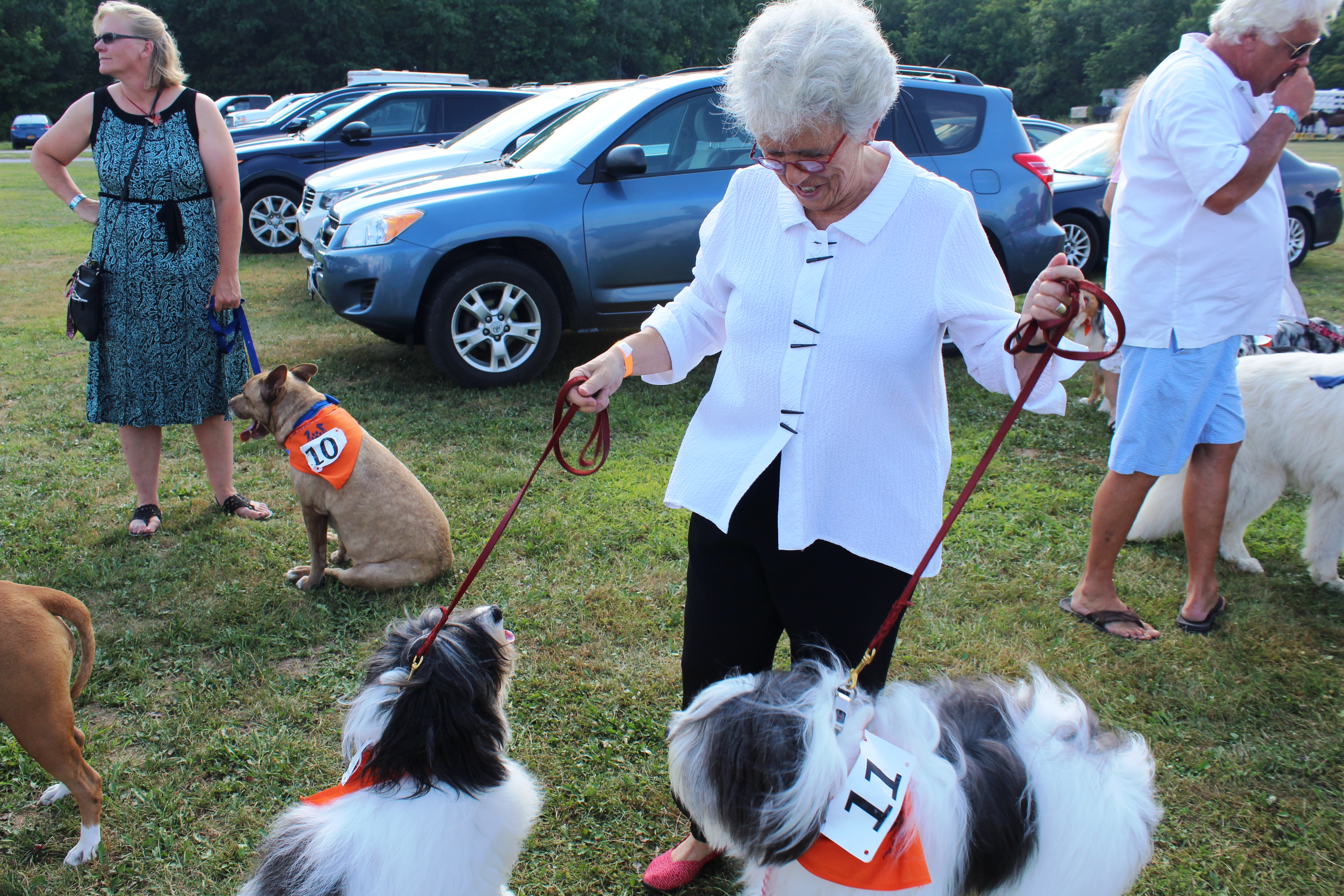 Woman looking at two dogs at the Saratoga Dog & Pony Show to benefit AIM Services, Inc.