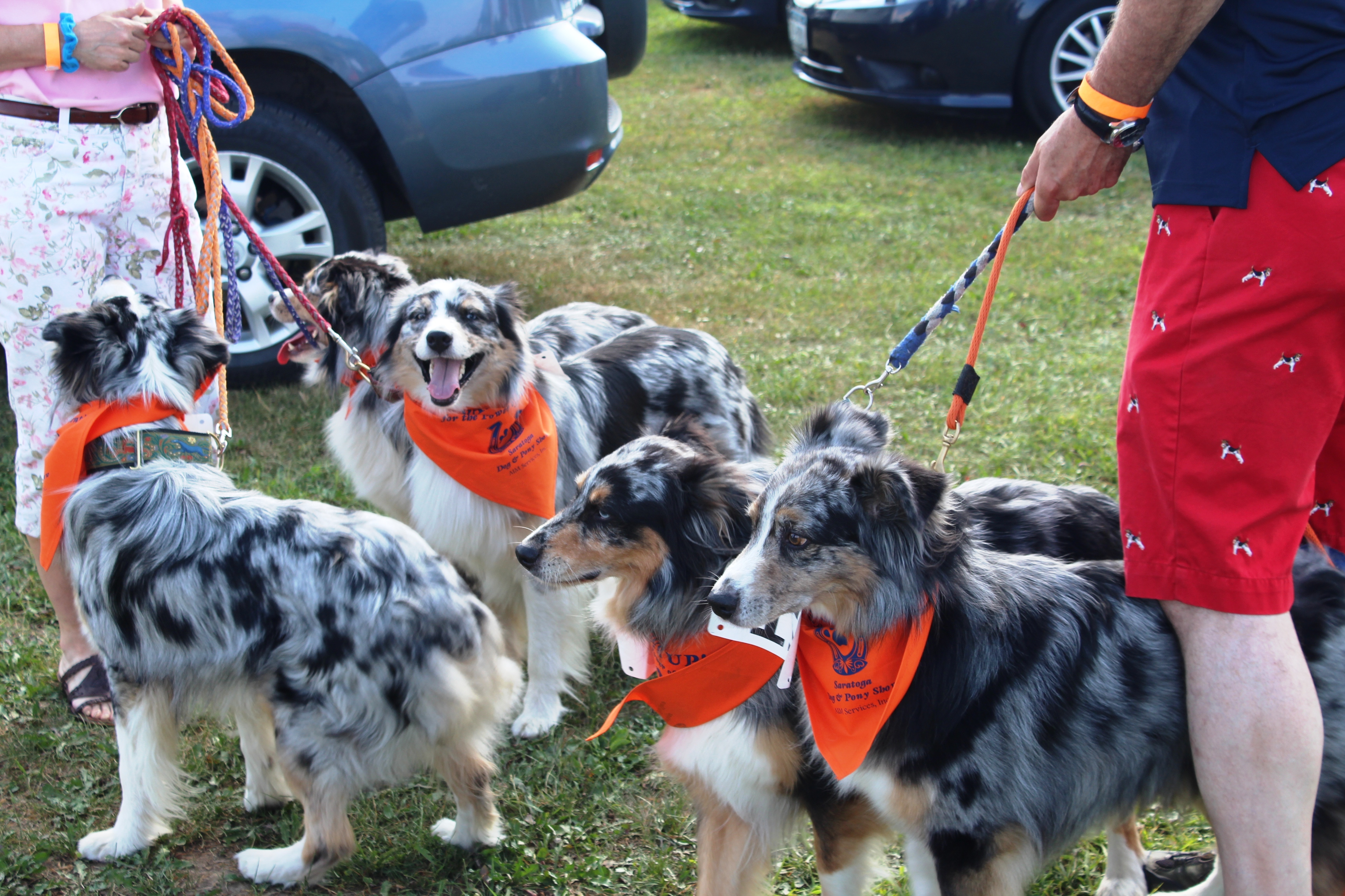 Litter of dogs ready to show at the Saratoga Dog's Pony Show to benefit AIM Services, Inc.