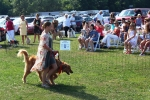 Woman walking dog at the Saratoga Dog's Pony Show to benefit AIM Services, Inc.