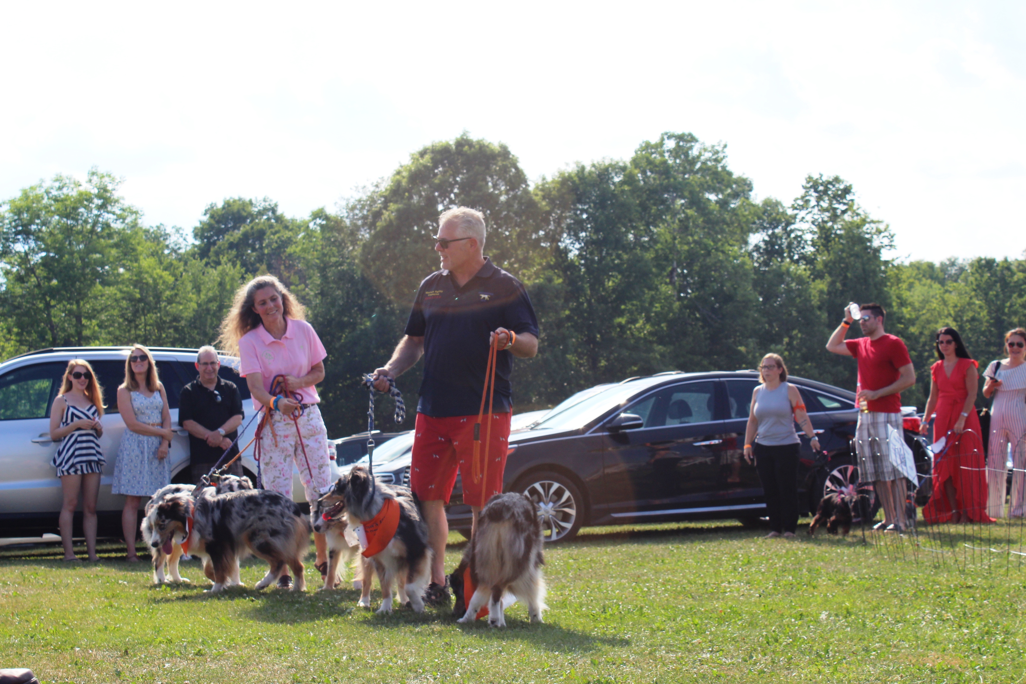 Couple walking large group of dogs at the Saratoga Dog & Pony Show to benefit AIM Services, Inc.
