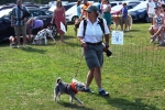 Woman with large camera walking small dog at the Saratoga Dog & Pony Show to benefit AIM Services, Inc.