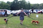 Woman walking two dogs on leashes at the Saratoga Dog & Pony Show to benefit AIM Services, Inc.