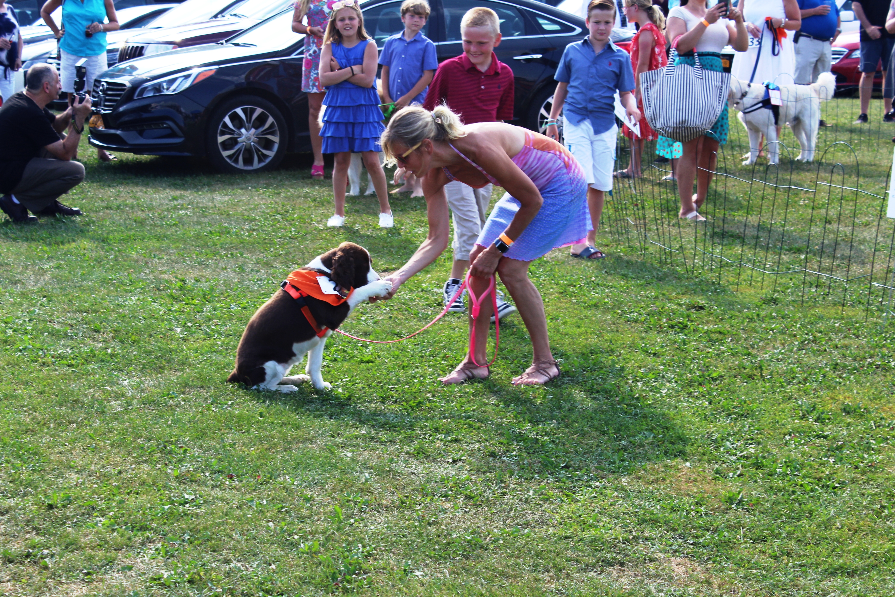 Dog giving paw trick at the Saratoga Dogs Pony Show to benefit AIM Services, Inc.