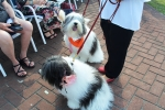two fuffly dogs at the Saratoga Dog & Pony Show to benefit AIM Services, Inc.