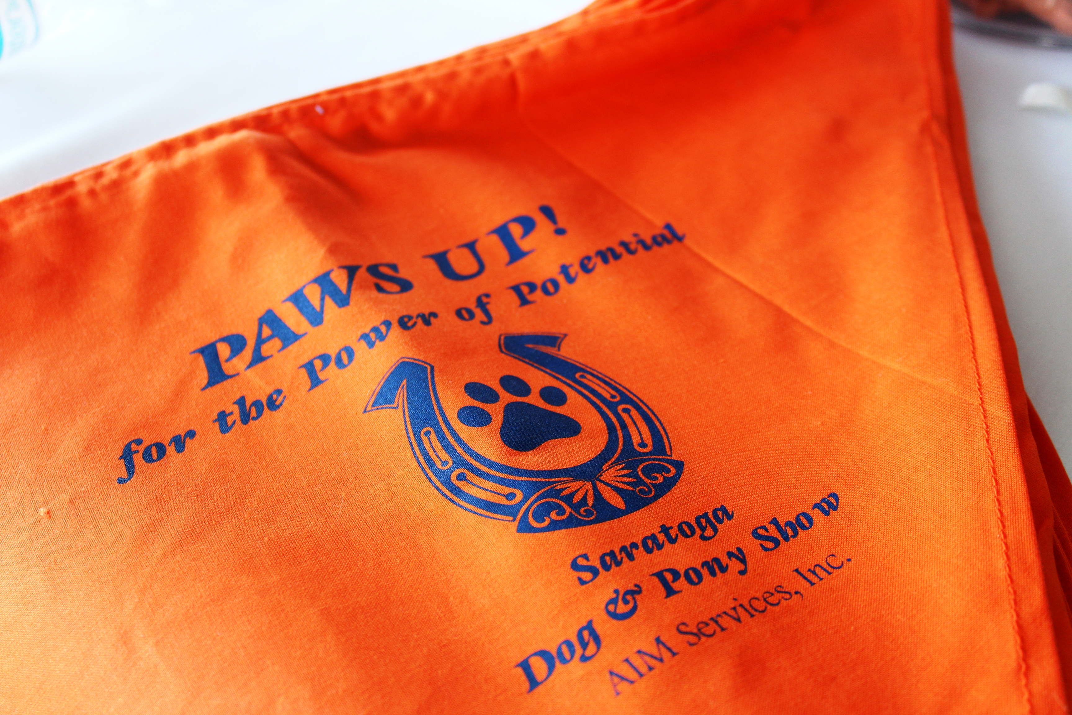 Paws up for the power of potential bandana at the Saratoga Dogs Pony Show to benefit AIM Services, Inc.