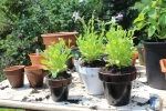 Plants being potted into pots for small spaces - AIM Services, Inc.