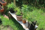 Plants & flowers in pots on wooden bench - AIM Services, Inc.